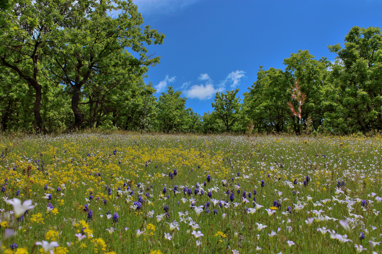 Wild flowers in spring neophron tours share this mightylinksfo Image collections